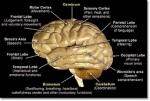 otak lengkap